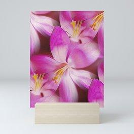 Pink Crocuses Mini Art Print