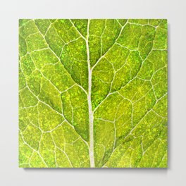 Photosynthesis Metal Print