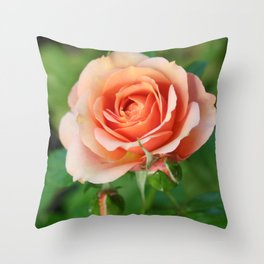 Garden pink rose flower blooming and two rose buds Throw Pillow