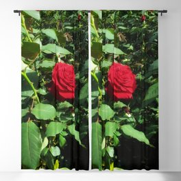 Deep Red Rose Blackout Curtain