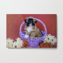 Brown and White Shih Tzu Puppy Standing in a Purple Basket with Flowers in Front of a Red Background Metal Print