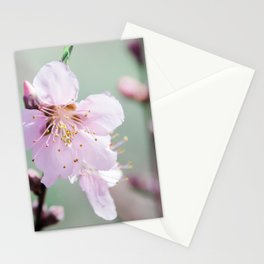 Peach Blossoms 5 Stationery Cards