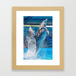 Dolphins jumping out of water on circus show Framed Art Print