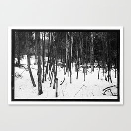 NORWEGIAN FOREST IX Canvas Print