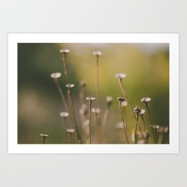 Subtleness Macro Photo Art Print