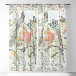 Exotic Birds // Oiseaux IV by Adolphe Millot XL 19th Century Science Textbook Diagram Artwork Sheer Curtain