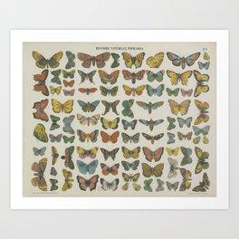 BUTTERFLIES Wall Art Decor Natural History Print - colourful butterfly litograph Art Print