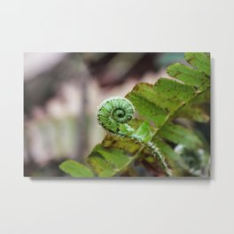 Fiddlehead Metal Print