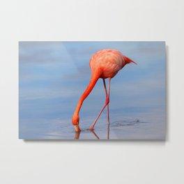 Flamingo in Open Water Metal Print