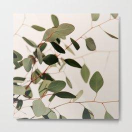 Summer Eucalyptus #2 Metal Print