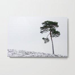 Lonely tree on the dunesI NP Maasduinen I Netherlands I photo art print Metal Print