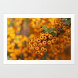 Fall berries in orange Art Print