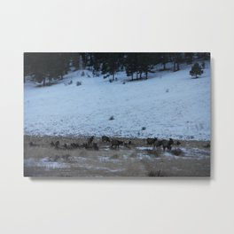 Elk I Metal Print
