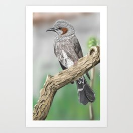 Bulbul on a Branch Art Print