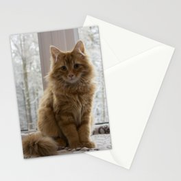 Pudding the kitten Stationery Cards