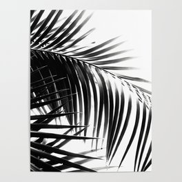 Palm Leaves Black & White Vibes #3 #tropical #decor #art #society6 Poster