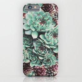 Succulent Sempervivum Plants iPhone Case