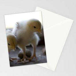 Buff Orpington Chicks Stationery Cards