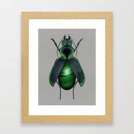 Malachite Beetle Framed Art Print