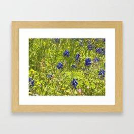 Texas Bluebonnets Framed Art Print