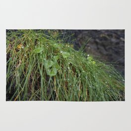 Dew Covered Coastal Plants on the Cliffs Rug