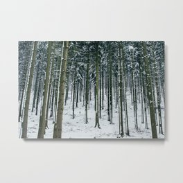 Winter Forest Treescape Metal Print