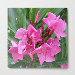 Pink Oleander Bouquet Closeup  Metal Print