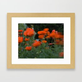 poppies in the breeze Framed Art Print