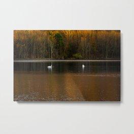 Two white swans in lake Metal Print
