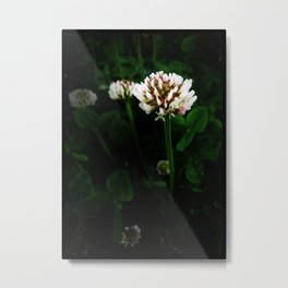 White Clover Metal Print