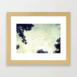 Flock of birds at sunset Framed Art Print