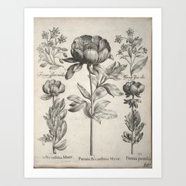 Antique floral black and white chinoiserie flower vintage Paris flowers French botanical goth print Art Print