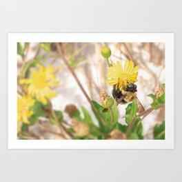 Bee on Yellow Flower Art Print
