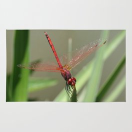 Beautiful Red Skimmer or Firecracker Dragonfly Rug
