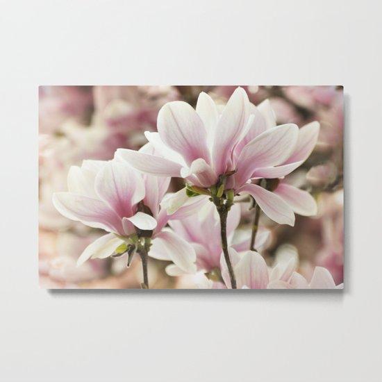 Beautiful Pink Magnolia Metal Print