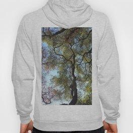 Dos Picos Ramona Oak Tree Hoody