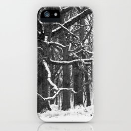 Tree in the winter (RR 272) iPhone Case