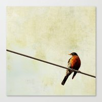 robin Canvas Prints featuring Robin by Beverly LeFevre