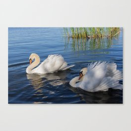 Swan Art. Two Beautiful Swans with Fluffy Wings on the Lake Canvas Print