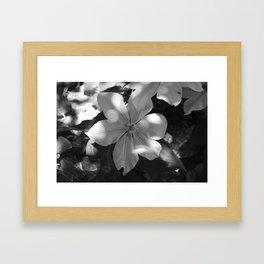 Magnolia in bloom Framed Art Print