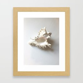 Conch Still Life Framed Art Print