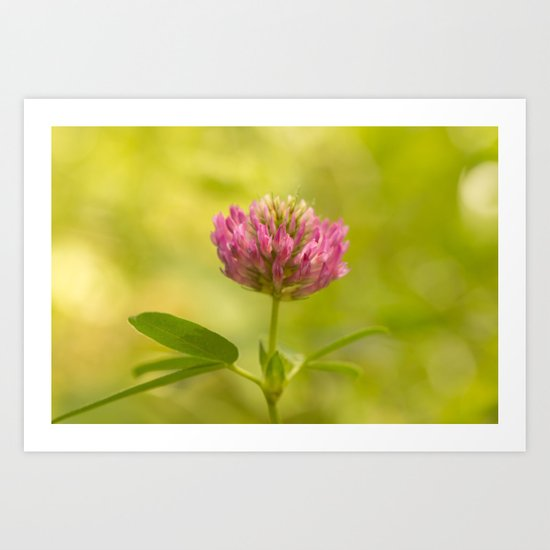 Red clover in August Art Print