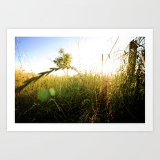 Shrub Art Print