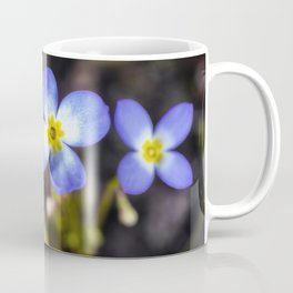 Four tiny bluet flowers Coffee Mug