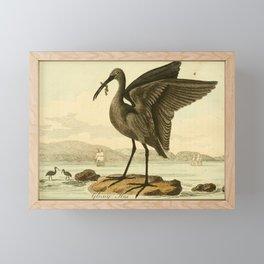 Vintage Print - Bullock's London Museum & Pantherion (1812) - Glossy Ibis Framed Mini Art Print
