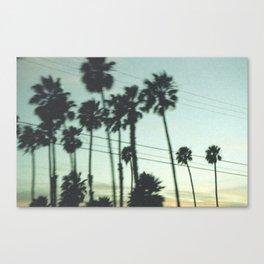 Los Angeles Palm Trees Canvas Print