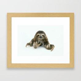 Arctic Sloth Framed Art Print