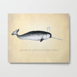 Narwhal, Narwhal Art Print, Narwhal Print, Beach Decor, Illustration, Natural History, Narwhal Poster, Whale Species, Whale Prints, Classroom, Science Art, Nautical, Marine Life, Ocean, Beach, Biology, Nature, Animal, Whales, Narwhal Art Metal Print