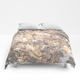 Charisma Comforters