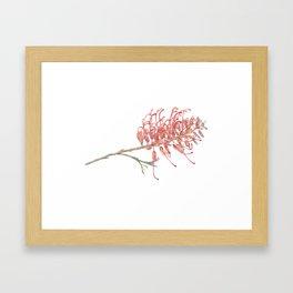 Grevillea Framed Art Print